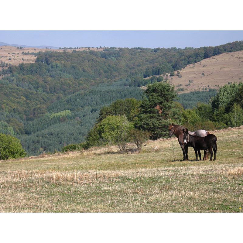 Вие разглеждате снимки от статията: Копривщица - заслон Богдан