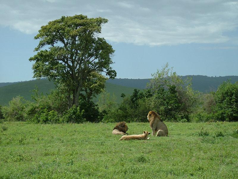 Вие разглеждате снимки от статията: Борис и Васко Африкански